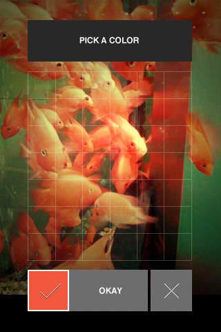Goldfish Music Box